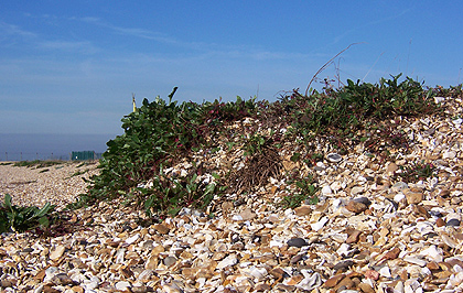 Web design - photo of Stokes Bay Beach